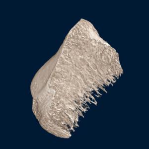 Neoscan MicroCT Microtomografia