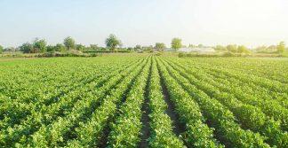 análise de solos e fertilizantes